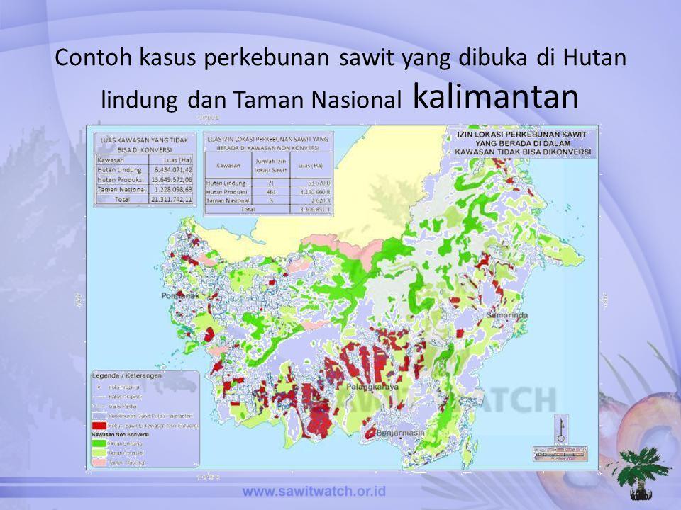 Contoh kasus perkebunan sawit yang dibuka di Hutan lindung dan Taman Nasional kalimantan