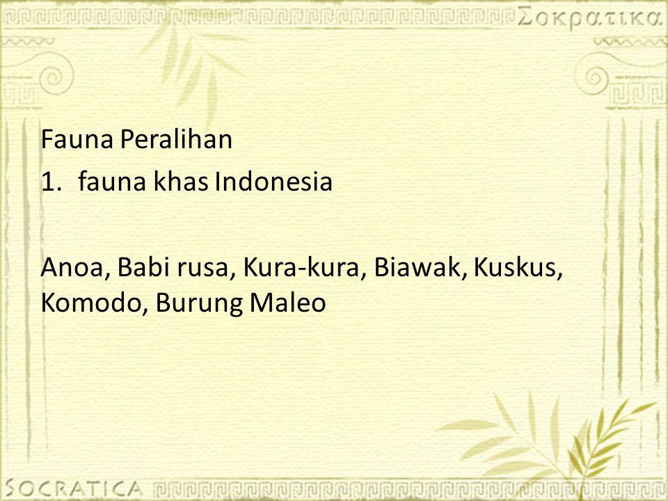 Fauna Peralihan 1.fauna khas Indonesia Anoa, Babi rusa, Kura-kura, Biawak, Kuskus, Komodo, Burung Maleo