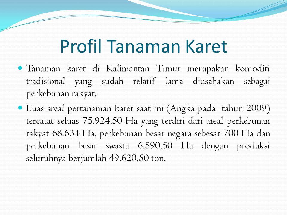  Sebagian besar produk karet Kalimantan Timur dipasarkan berupa produk primer (raw material) dalam bentuk sleb kering  Produk tersebut pada umumnya dipasarkan ke Banjarmasin untuk kebutuhan pabrik Crumb Rubber.