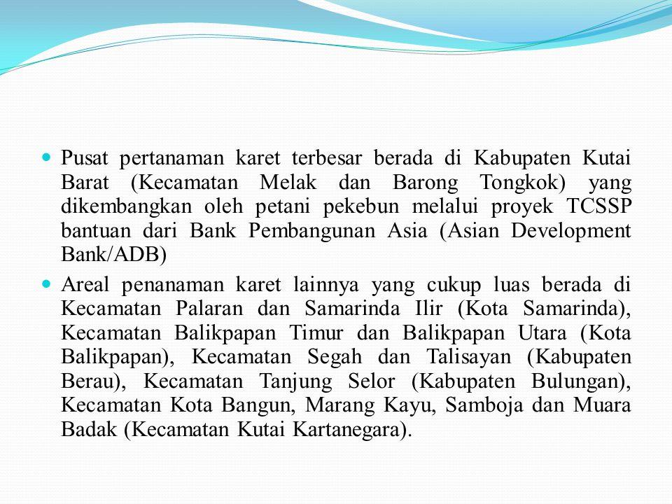  Pusat pertanaman karet terbesar berada di Kabupaten Kutai Barat (Kecamatan Melak dan Barong Tongkok) yang dikembangkan oleh petani pekebun melalui p