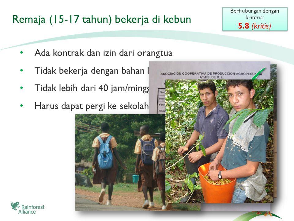 Remaja (15-17 tahun) bekerja di kebun • Ada kontrak dan izin dari orangtua • Tidak bekerja dengan bahan kimia • Tidak lebih dari 40 jam/minggu • Harus dapat pergi ke sekolah jika mereka menginginkan Berhubungan dengan kriteria: 5.8 (kritis) Berhubungan dengan kriteria: 5.8 (kritis)