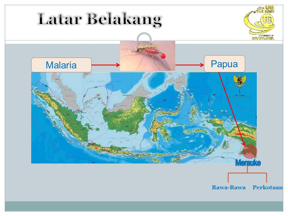 Malaria Papua Rawa-Rawa Perkotaan