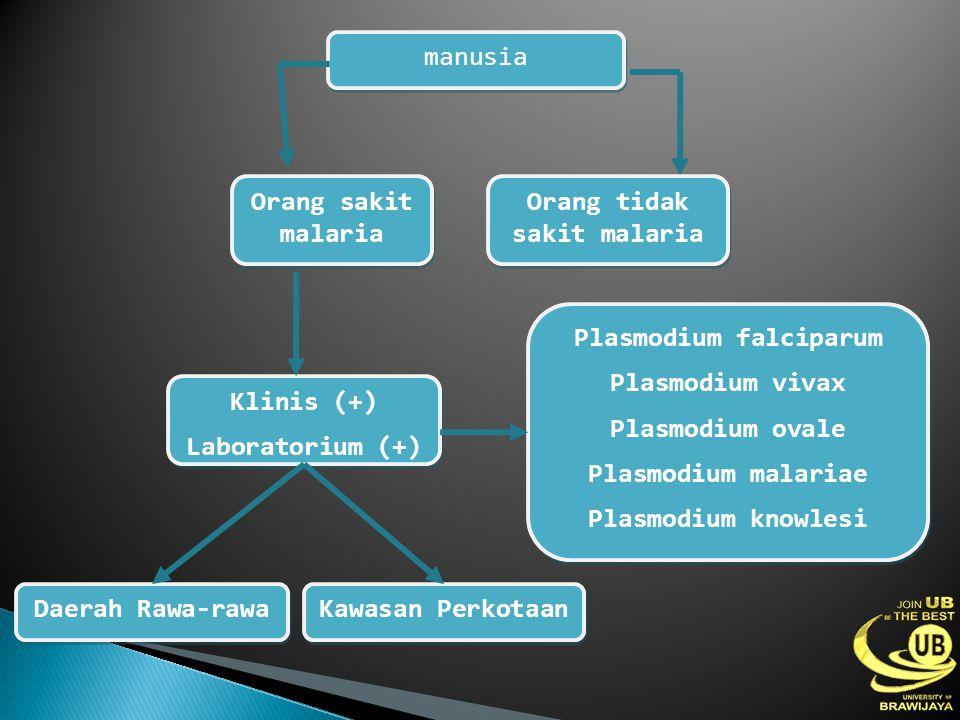manusia Orang sakit malaria Orang tidak sakit malaria Klinis (+) Laboratorium (+) Klinis (+) Laboratorium (+) Kawasan Perkotaan Daerah Rawa-rawa Plasm