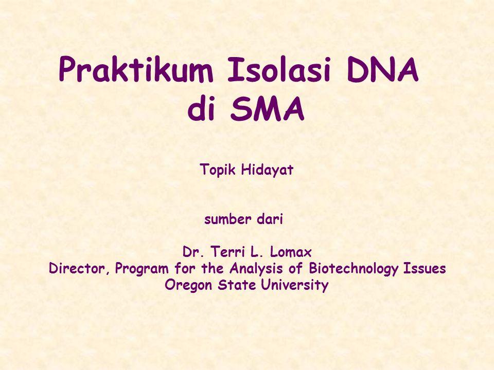 Praktikum Isolasi DNA di SMA Topik Hidayat sumber dari Dr. Terri L. Lomax Director, Program for the Analysis of Biotechnology Issues Oregon State Univ