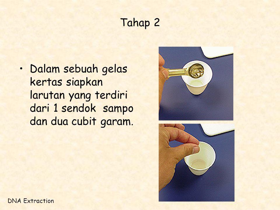 Tahap 2 •Dalam sebuah gelas kertas siapkan larutan yang terdiri dari 1 sendok sampo dan dua cubit garam. DNA Extraction