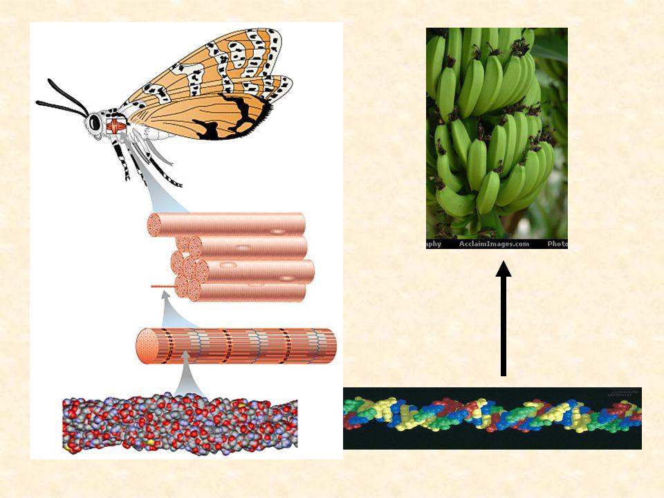 DNA di makanan ku ? Apakah DNA itu? Dimana kita temukan DNA?