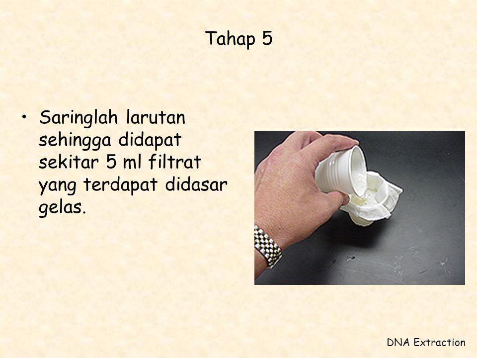 Tahap 5 •Saringlah larutan sehingga didapat sekitar 5 ml filtrat yang terdapat didasar gelas. DNA Extraction