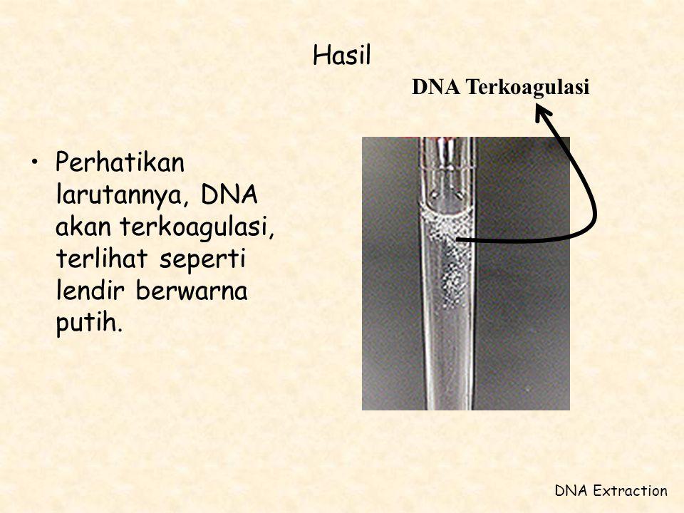 Hasil •Perhatikan larutannya, DNA akan terkoagulasi, terlihat seperti lendir berwarna putih. DNA Extraction DNA Terkoagulasi