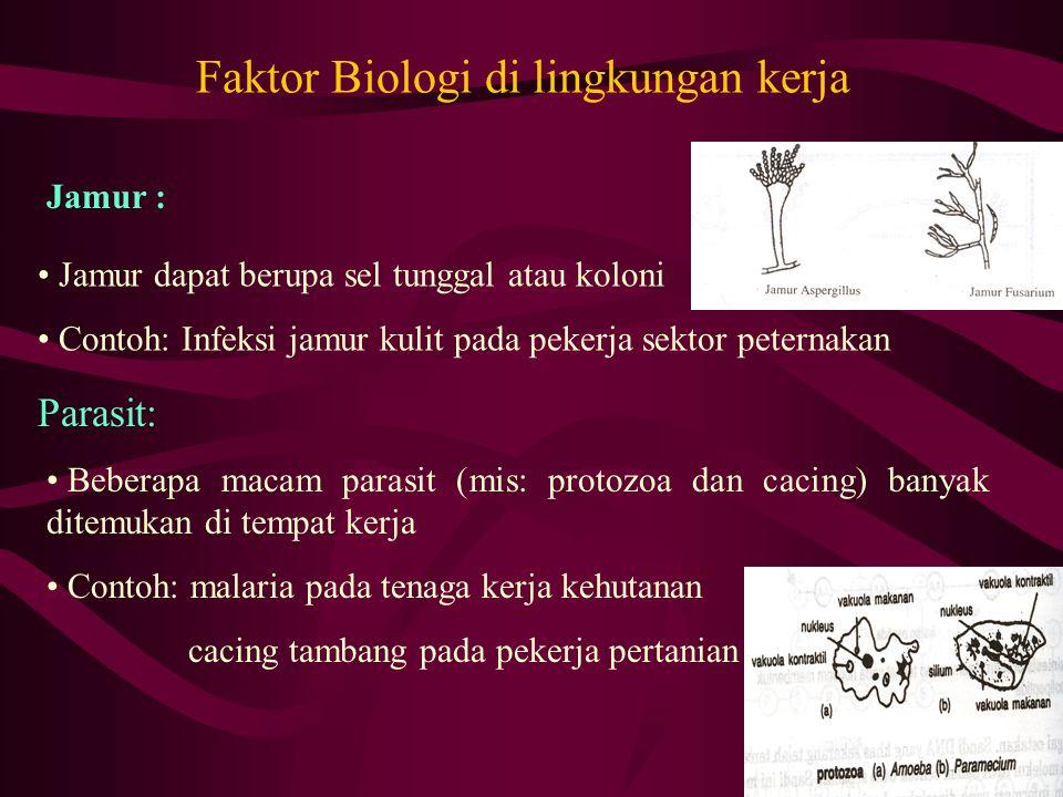 Faktor Biologi di lingkungan kerja • Jamur dapat berupa sel tunggal atau koloni • Contoh: Infeksi jamur kulit pada pekerja sektor peternakan Jamur : P