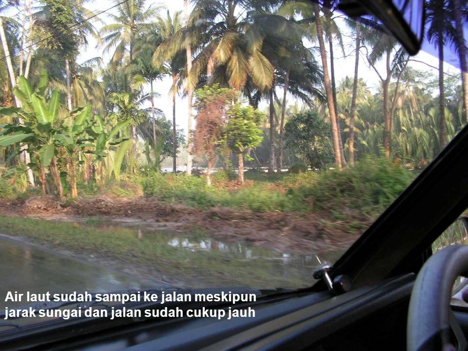 Air laut sudah sampai ke jalan meskipun jarak sungai dan jalan sudah cukup jauh