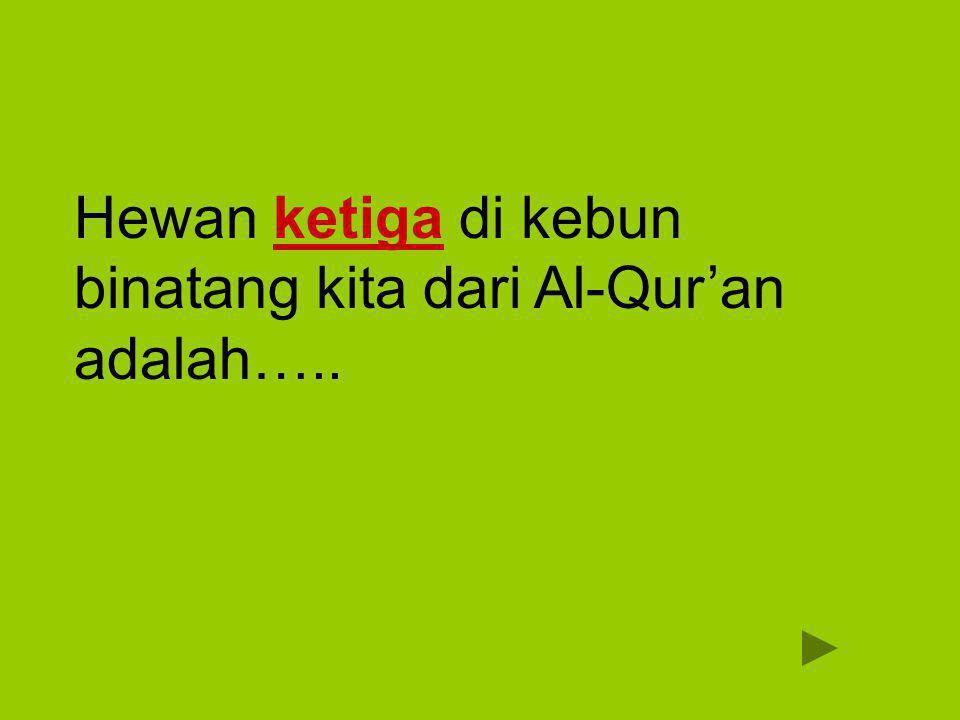 Unta جَمَلٌ jamal Dan berserulah kepada manusia untuk mengerjakan haji, niscaya mereka akan datang kepadamu dengan berjalan kaki, dan mengendarai unta yang kurus yang datang dari segenap penjuru yang jauh, QS Al-Hajj [22]:27 Dan berserulah kepada manusia untuk mengerjakan haji, niscaya mereka akan datang kepadamu dengan berjalan kaki, dan mengendarai unta yang kurus yang datang dari segenap penjuru yang jauh, QS Al-Hajj [22]:27 Unta adalah binatang yang hidup di padang pasir yang panas dan kering.