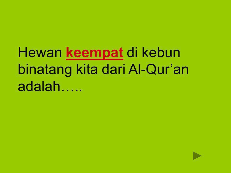 Gagak غُرَابٌ ghurab Kemudian Allah menyuruh seekor burung gagak menggali-gali di bumi untuk memperlihatkan kepadanya (Qabil) bagaimana seharusnya menguburkan mayat saudaranya.