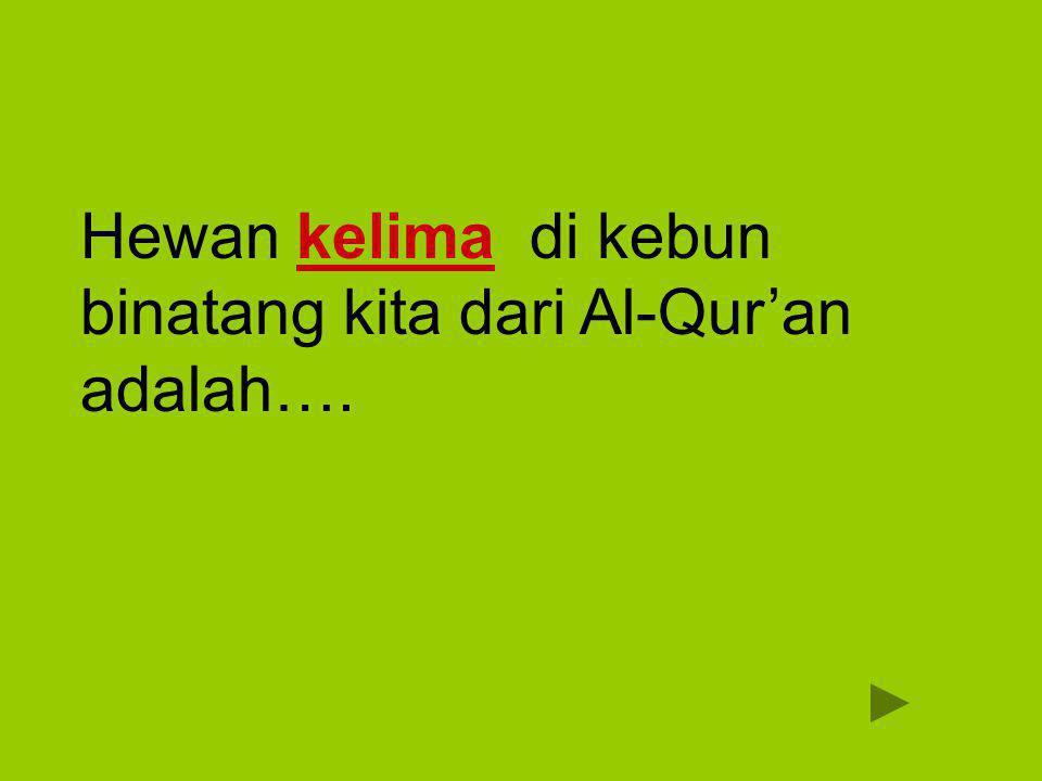 Hewan kelima di kebun binatang kita dari Al-Qur'an adalah….