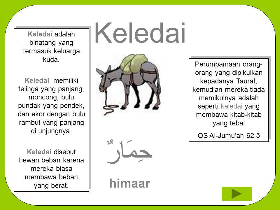 Keledai حِمَارٌ himaar Perumpamaan orang- orang yang dipikulkan kepadanya Taurat, kemudian mereka tiada memikulnya adalah seperti keledai yang membawa