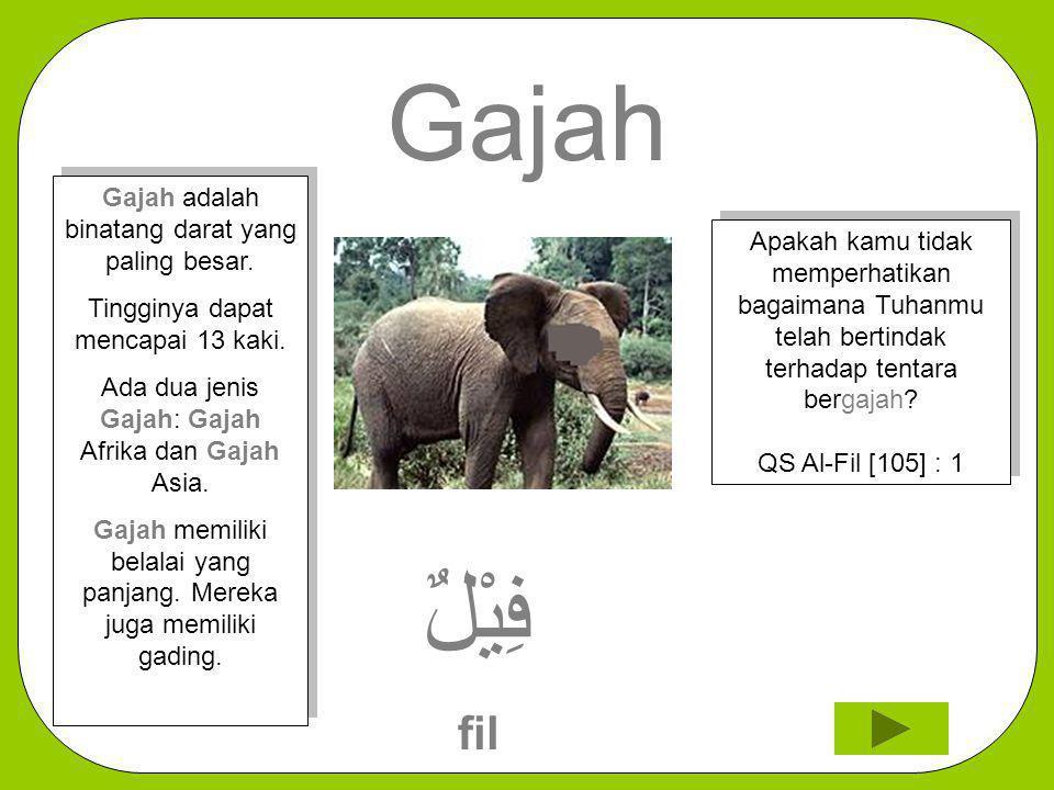 Gajah فِيْلٌ fil Apakah kamu tidak memperhatikan bagaimana Tuhanmu telah bertindak terhadap tentara bergajah? QS Al-Fil [105] : 1 Gajah adalah binatan