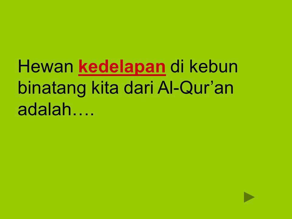 Kera قِرْدٌ qird Maka tatkala mereka bersikap sombong terhadap apa yang dilarang mereka mengerjakannya, Kami katakan kepadanya: Jadilah kamu kera yang hina.
