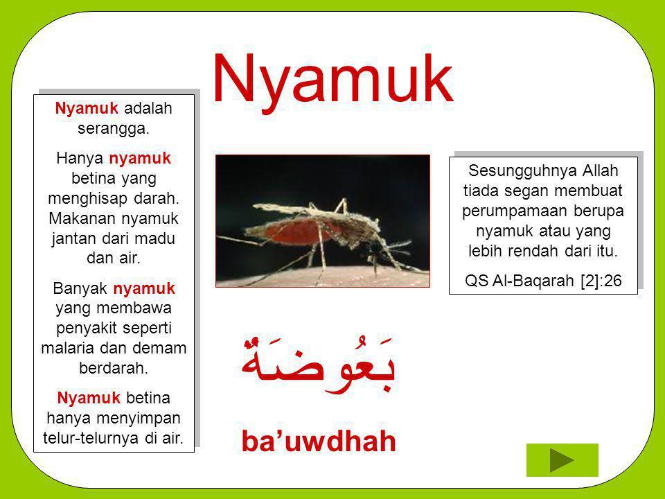 Nyamuk بَعُوضَةٌ ba'uwdhah Sesungguhnya Allah tiada segan membuat perumpamaan berupa nyamuk atau yang lebih rendah dari itu. QS Al-Baqarah [2]:26 Sesu