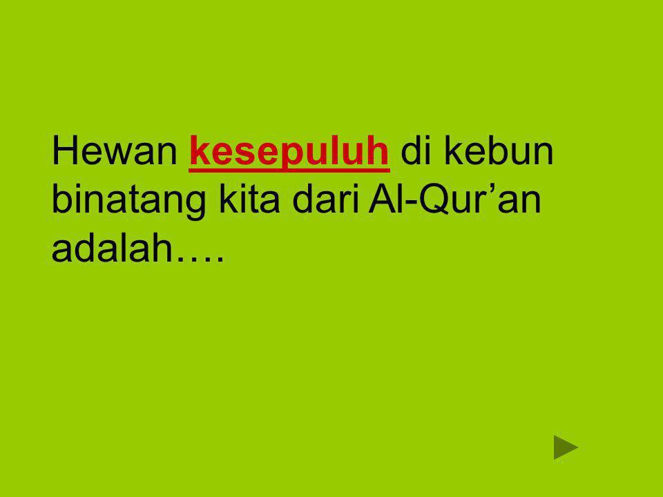 Hewan kesepuluh di kebun binatang kita dari Al-Qur'an adalah….