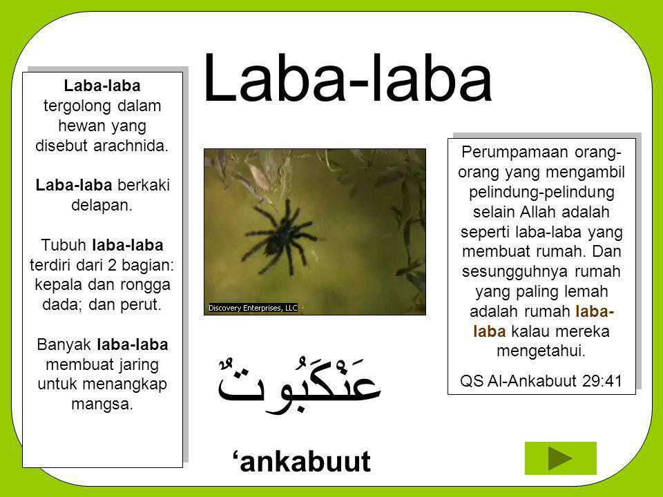 Laba-laba عَنْكَبُوتٌ 'ankabuut Perumpamaan orang- orang yang mengambil pelindung-pelindung selain Allah adalah seperti laba-laba yang membuat rumah.