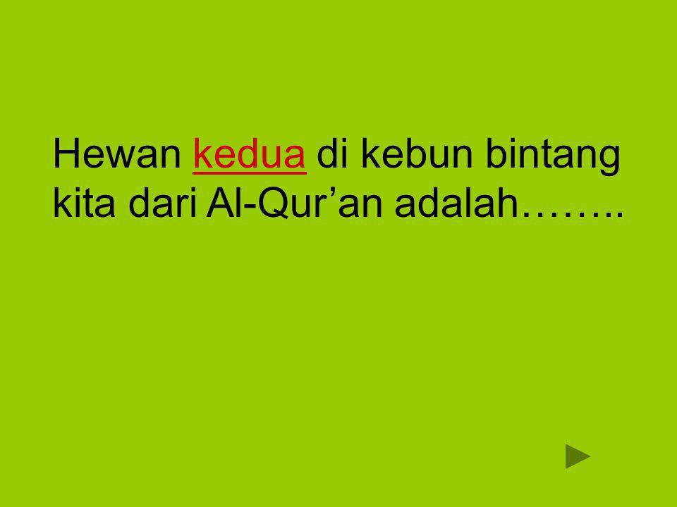 Hewan kedua di kebun bintang kita dari Al-Qur'an adalah……..