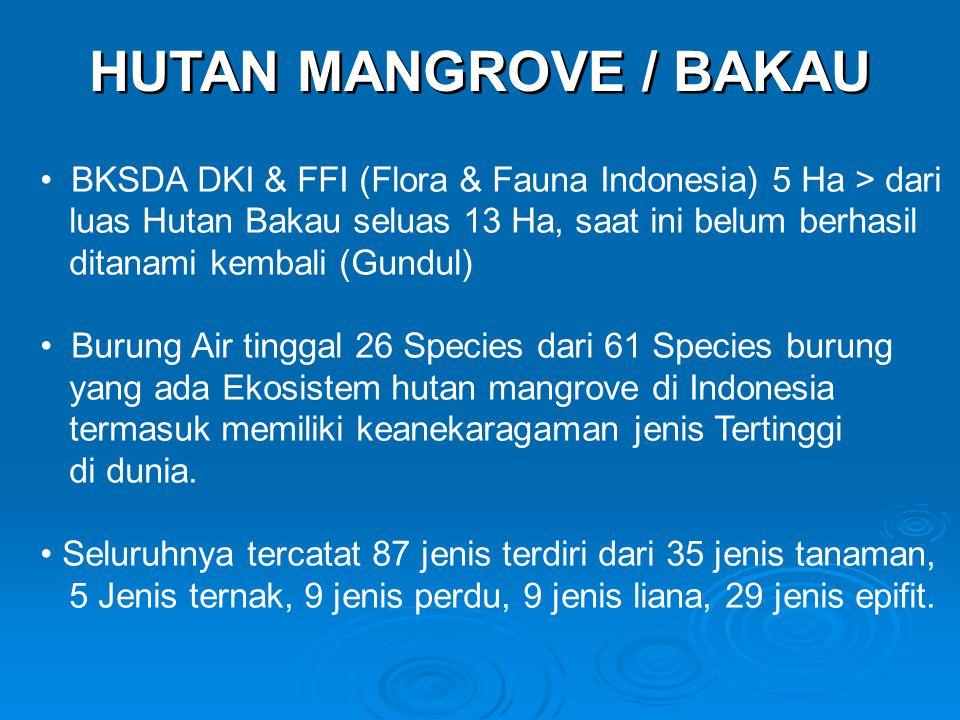 HUTAN MANGROVE / BAKAU • BKSDA DKI & FFI (Flora & Fauna Indonesia) 5 Ha > dari luas Hutan Bakau seluas 13 Ha, saat ini belum berhasil ditanami kembali (Gundul) • Burung Air tinggal 26 Species dari 61 Species burung yang ada Ekosistem hutan mangrove di Indonesia termasuk memiliki keanekaragaman jenis Tertinggi di dunia.