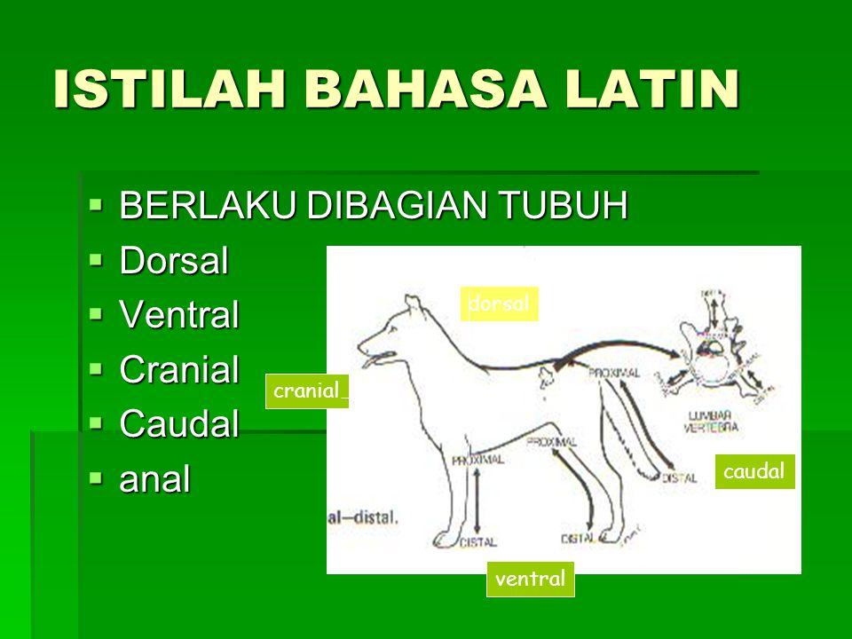 ISTILAH BAHASA LATIN  BERLAKU DIBAGIAN TUBUH  Dorsal  Ventral  Cranial  Caudal  anal dorsal ventral cranial caudal