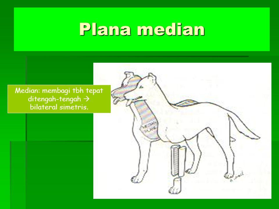 Plana median Median: membagi tbh tepat ditengah-tengah  bilateral simetris.