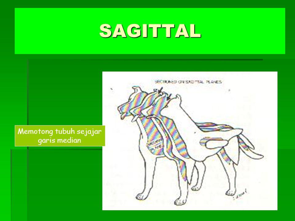 SAGITTAL Memotong tubuh sejajar garis median