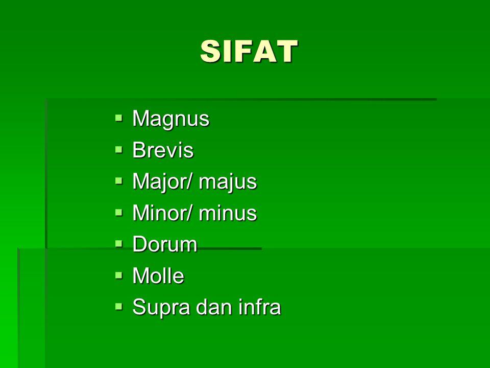 SIFAT  Magnus  Brevis  Major/ majus  Minor/ minus  Dorum  Molle  Supra dan infra