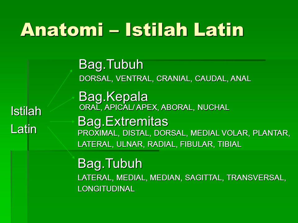 Anatomi – Istilah Latin IstilahLatin Bag.Tubuh Bag.Kepala Bag.Extremitas DORSAL, VENTRAL, CRANIAL, CAUDAL, ANAL ORAL, APICAL/ APEX, ABORAL, NUCHAL PROXIMAL, DISTAL, DORSAL, MEDIAL VOLAR, PLANTAR, LATERAL, ULNAR, RADIAL, FIBULAR, TIBIAL Bag.Tubuh LATERAL, MEDIAL, MEDIAN, SAGITTAL, TRANSVERSAL, LONGITUDINAL