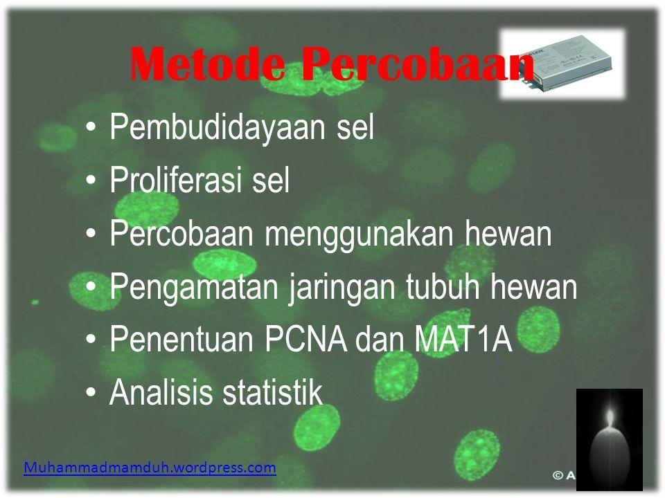 Latar Belakang Percobaan  Statins kemungkinan mempunyai efek terhadap sel Hepatocarcinoma (HCC).