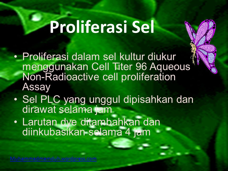 Pembudidayaan Sel  Sel PLC diperoleh dari ATCC  Sel PLC dibudidayakan dalam DMEM (Dulbecco's Modified Eagles Medium) ditambahkan 10% foetal bovine serum dan streptomycin Muhammadmamduh.wordpress.com