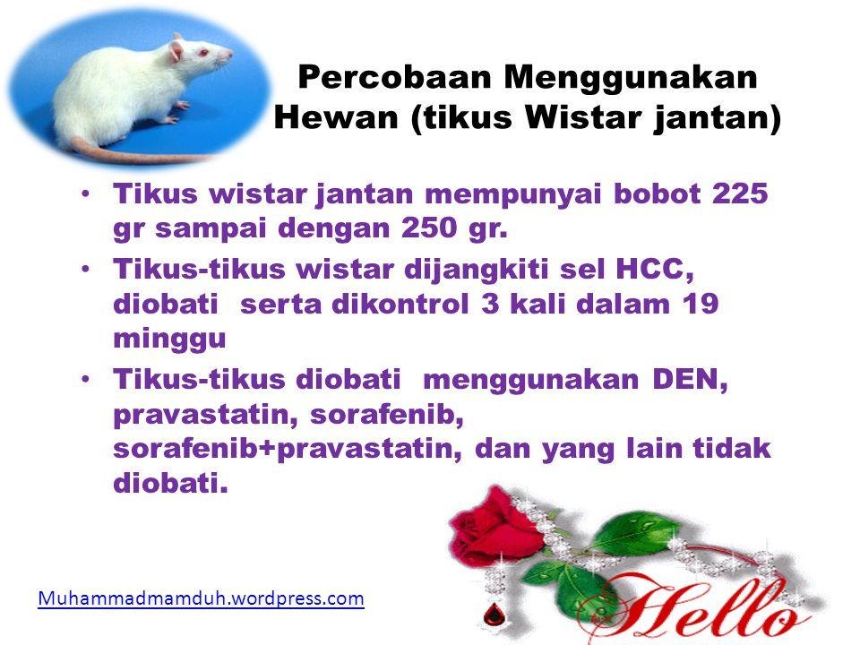 Percobaan Menggunakan Hewan (tikus Wistar jantan) • Tikus wistar jantan mempunyai bobot 225 gr sampai dengan 250 gr.