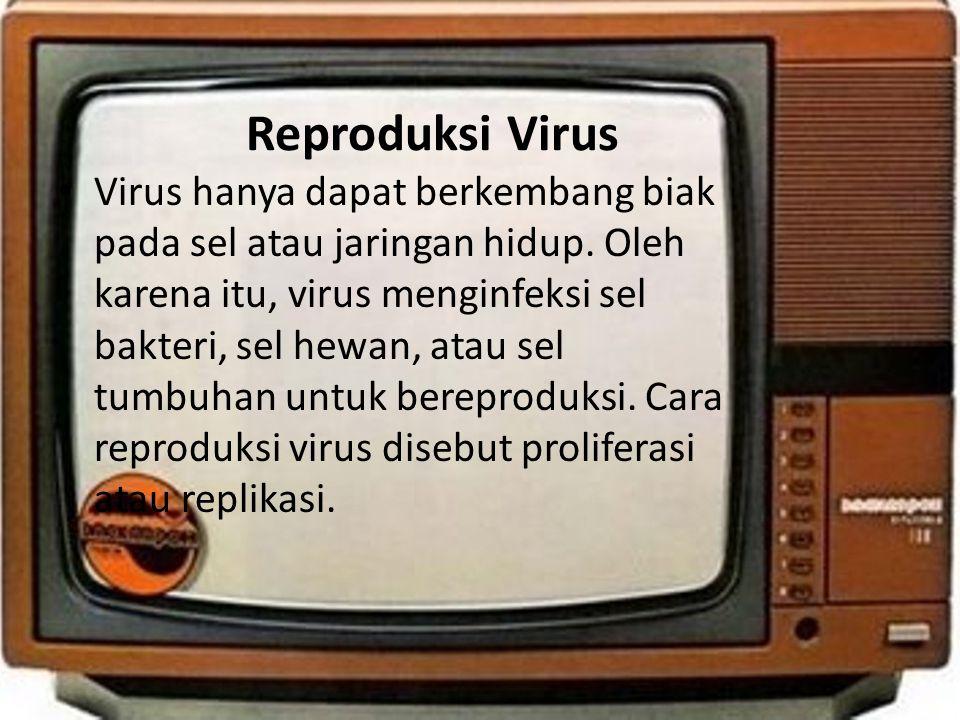 Reproduksi Virus • Virus hanya dapat berkembang biak pada sel atau jaringan hidup. Oleh karena itu, virus menginfeksi sel bakteri, sel hewan, atau sel