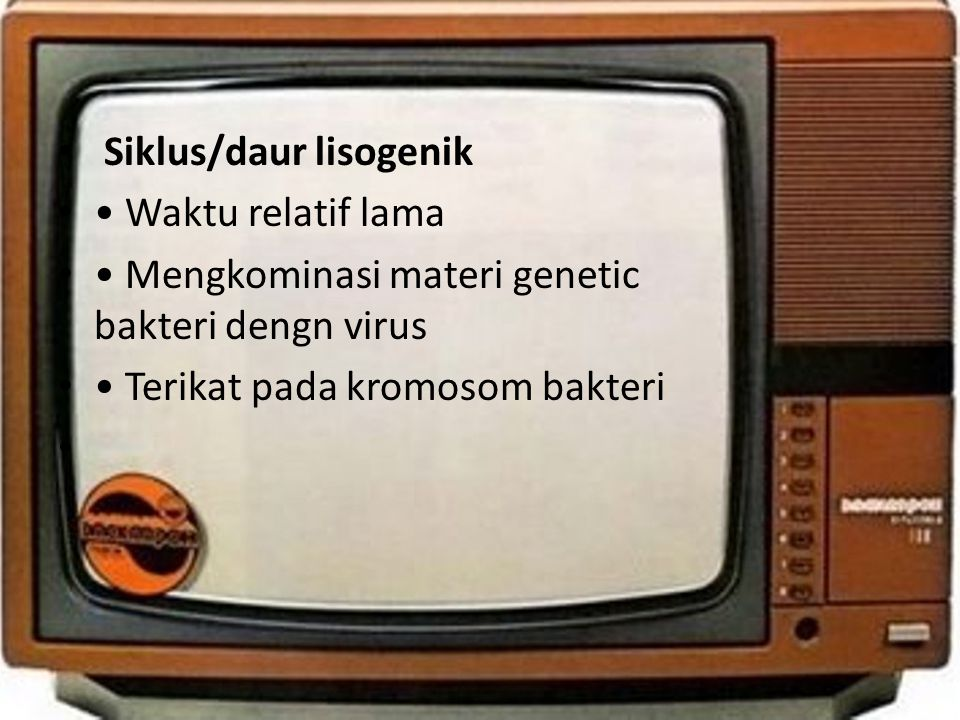 • Siklus/daur lisogenik • • Waktu relatif lama • • Mengkominasi materi genetic bakteri dengn virus • • Terikat pada kromosom bakteri •
