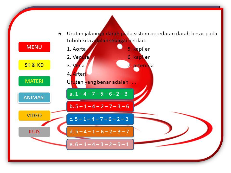 6.Urutan jalannya darah pada sistem peredaran darah besar pada tubuh kita adalah sebagai berikut.