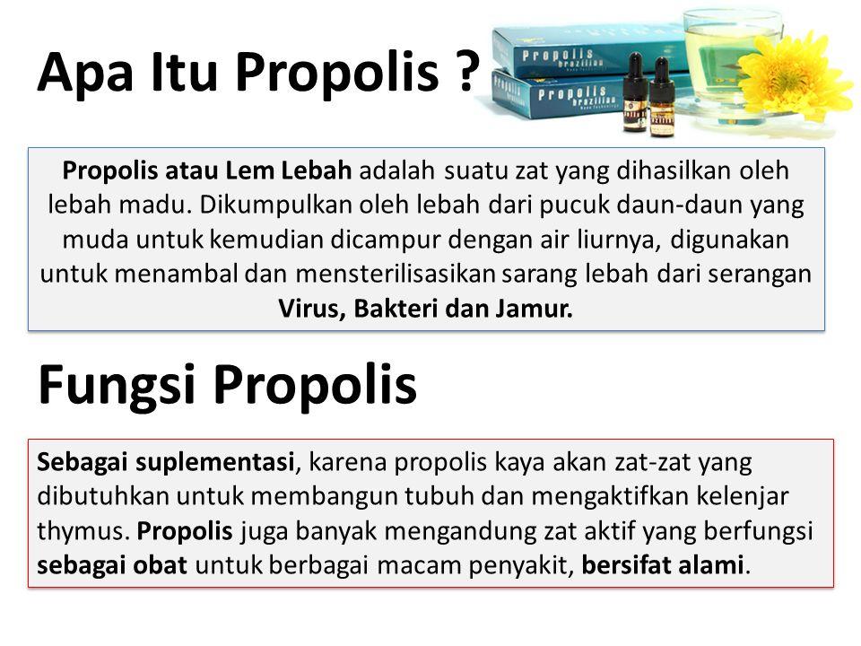 Apa Itu Propolis ? Propolis atau Lem Lebah adalah suatu zat yang dihasilkan oleh lebah madu. Dikumpulkan oleh lebah dari pucuk daun-daun yang muda unt