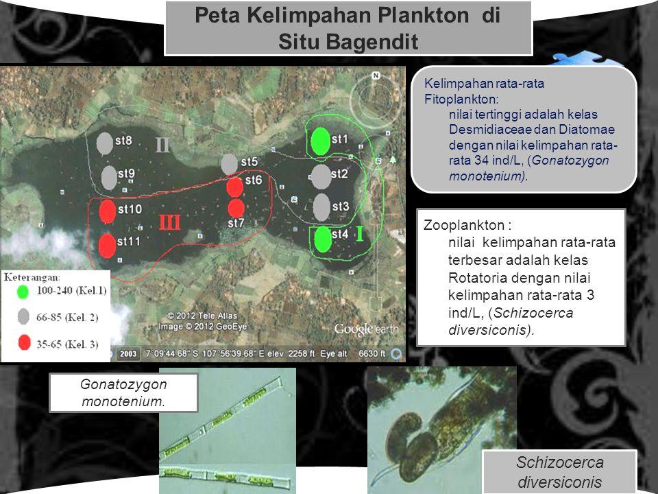 LOGO Click to edit Master text styles Peta Kelimpahan Plankton di Situ Bagendit Kelimpahan rata-rata Fitoplankton: nilai tertinggi adalah kelas Desmidiaceae dan Diatomae dengan nilai kelimpahan rata- rata 34 ind/L, (Gonatozygon monotenium).