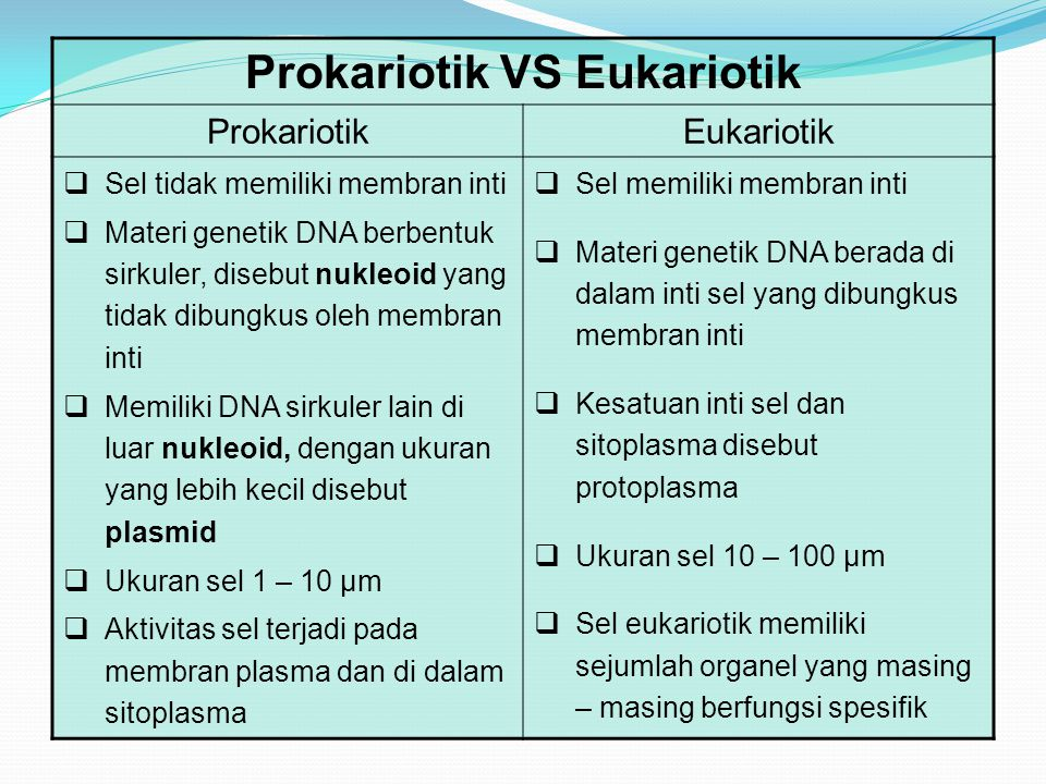 Prokariotik VS Eukariotik ProkariotikEukariotik  Sel tidak memiliki membran inti  Materi genetik DNA berbentuk sirkuler, disebut nukleoid yang tidak dibungkus oleh membran inti  Memiliki DNA sirkuler lain di luar nukleoid, dengan ukuran yang lebih kecil disebut plasmid  Ukuran sel 1 – 10 µm  Aktivitas sel terjadi pada membran plasma dan di dalam sitoplasma  Sel memiliki membran inti  Materi genetik DNA berada di dalam inti sel yang dibungkus membran inti  Kesatuan inti sel dan sitoplasma disebut protoplasma  Ukuran sel 10 – 100 µm  Sel eukariotik memiliki sejumlah organel yang masing – masing berfungsi spesifik