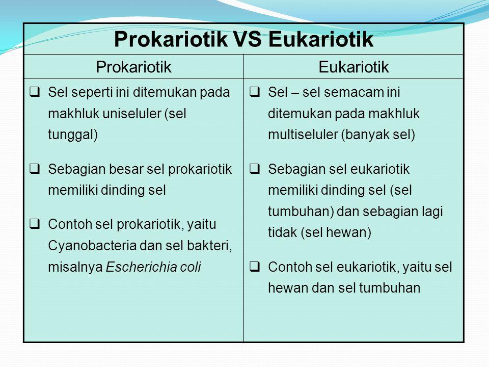 Prokariotik VS Eukariotik ProkariotikEukariotik  Sel seperti ini ditemukan pada makhluk uniseluler (sel tunggal)  Sebagian besar sel prokariotik memiliki dinding sel  Contoh sel prokariotik, yaitu Cyanobacteria dan sel bakteri, misalnya Escherichia coli  Sel – sel semacam ini ditemukan pada makhluk multiseluler (banyak sel)  Sebagian sel eukariotik memiliki dinding sel (sel tumbuhan) dan sebagian lagi tidak (sel hewan)  Contoh sel eukariotik, yaitu sel hewan dan sel tumbuhan