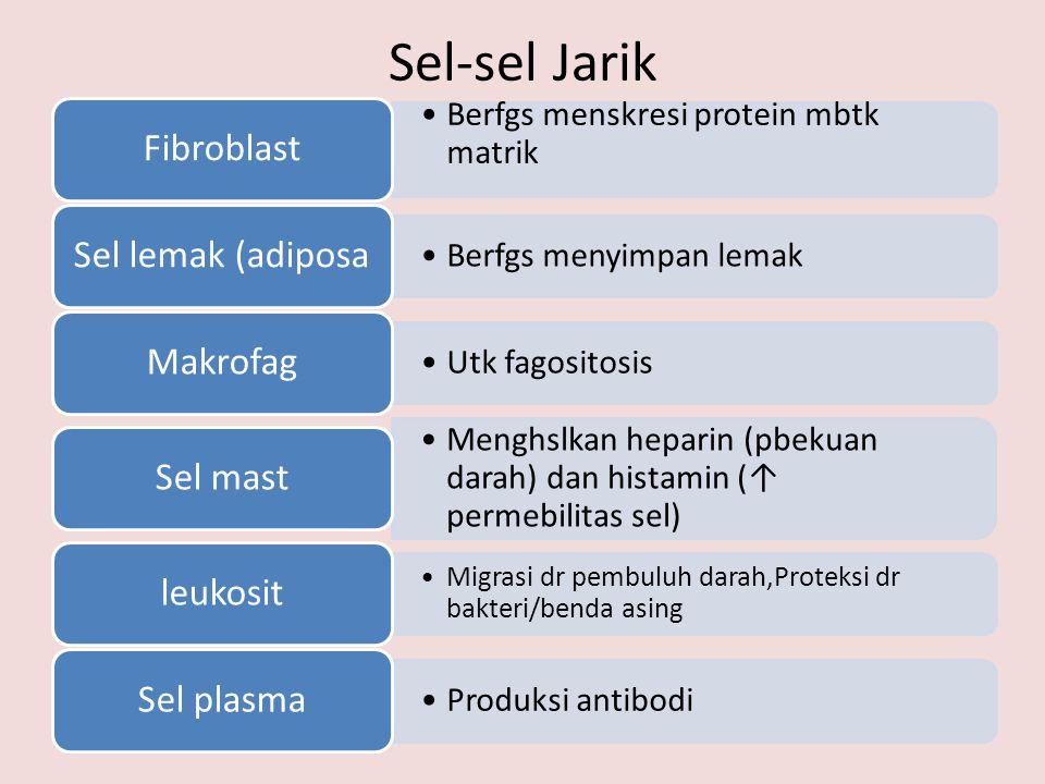 Sel-sel Jarik •Berfgs menskresi protein mbtk matrik Fibroblast •Berfgs menyimpan lemak Sel lemak (adiposa •Utk fagositosis Makrofag •Menghslkan heparin (pbekuan darah) dan histamin (↑ permebilitas sel) Sel mast •Migrasi dr pembuluh darah,Proteksi dr bakteri/benda asing leukosit •Produksi antibodi Sel plasma