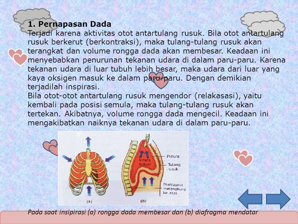 1. Pernapasan Dada Terjadi karena aktivitas otot antartulang rusuk. Bila otot antartulang rusuk berkerut (berkontraksi), maka tulang-tulang rusuk akan