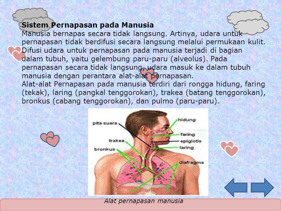 Sistem Pernapasan pada Manusia Manusia bernapas secara tidak langsung. Artinya, udara untuk pernapasan tidak berdifusi secara langsung melalui permuka
