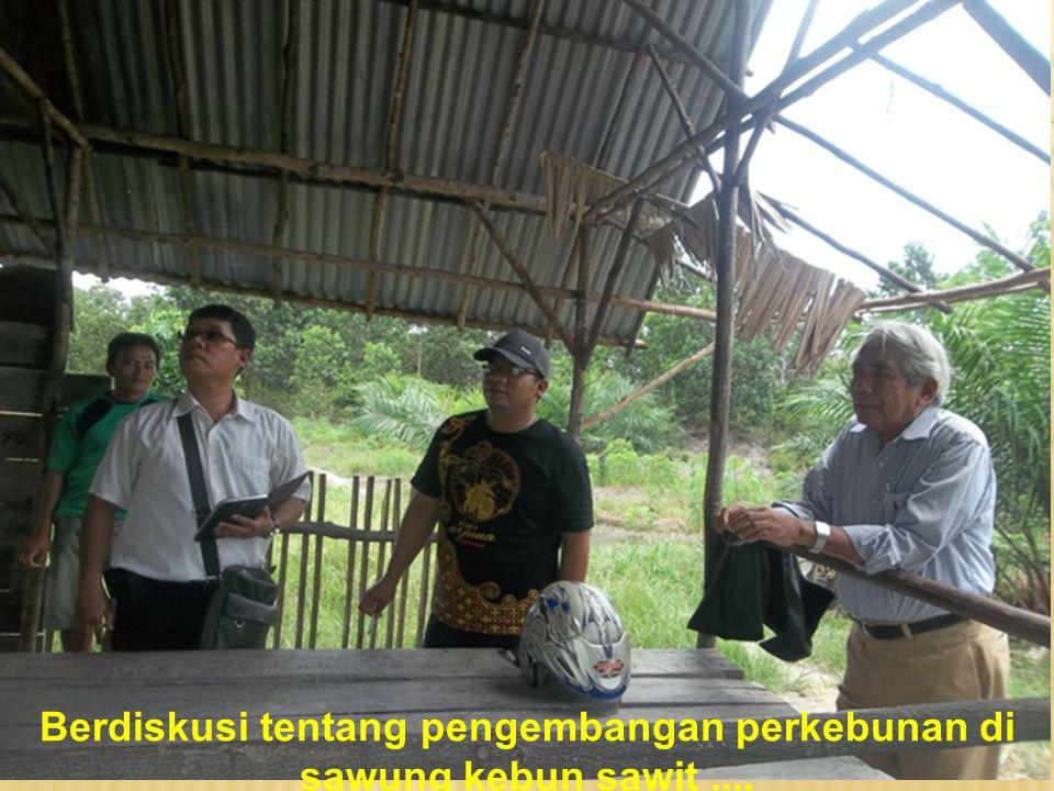 Berdiskusi tentang pengembangan perkebunan di sawung kebun sawit....