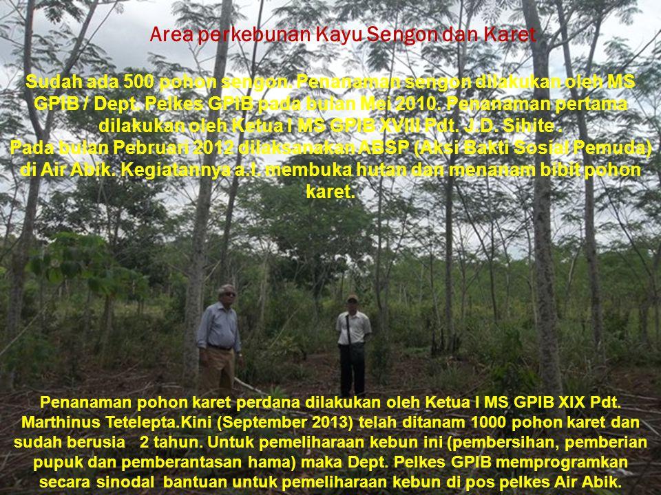 Area perkebunan Kayu Sengon dan Karet Sudah ada 500 pohon sengon. Penanaman sengon dilakukan oleh MS GPIB / Dept. Pelkes GPIB pada bulan Mei 2010. Pen