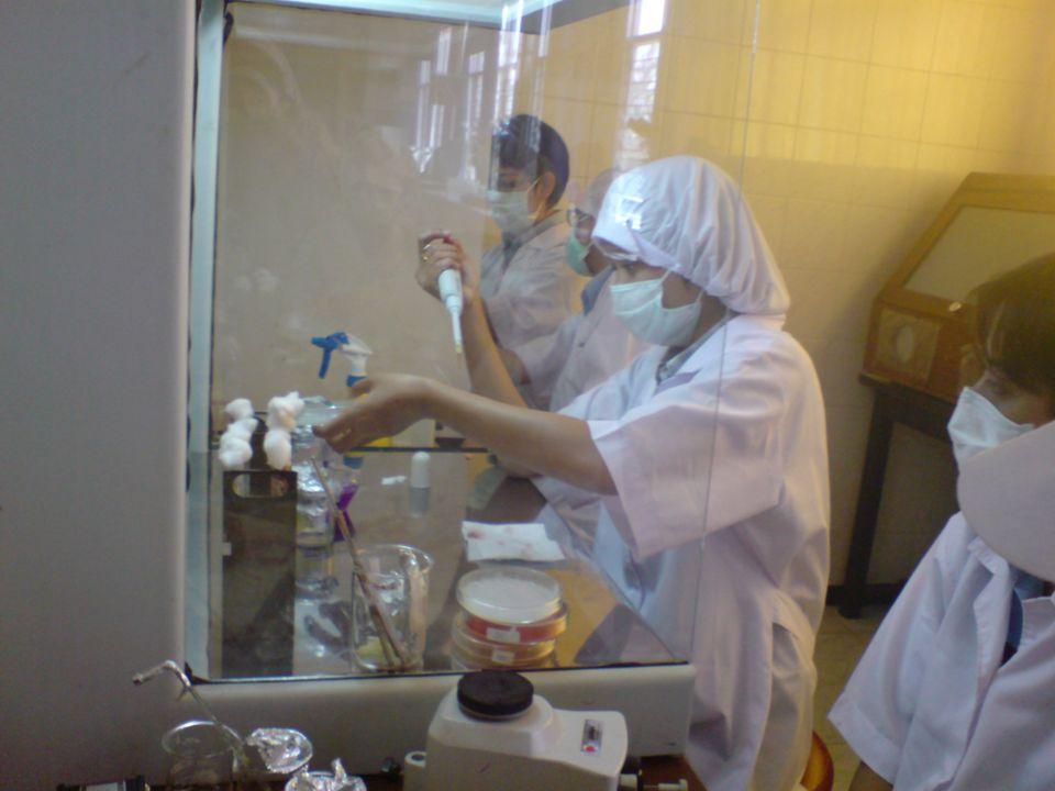 Foto preparat kapang Penicillium citrinum dilihat dibawah mikroskop (pada perbesaran 400X)