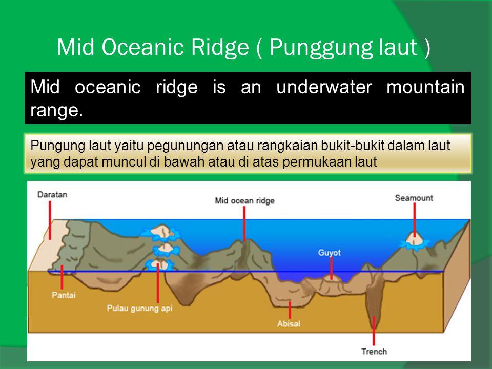 Mid Oceanic Ridge ( Punggung laut ) Mid oceanic ridge is an underwater mountain range. Pungung laut yaitu pegunungan atau rangkaian bukit-bukit dalam