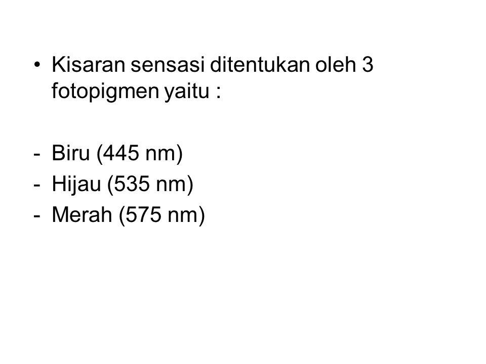 •Kisaran sensasi ditentukan oleh 3 fotopigmen yaitu : -Biru (445 nm) -Hijau (535 nm) -Merah (575 nm)