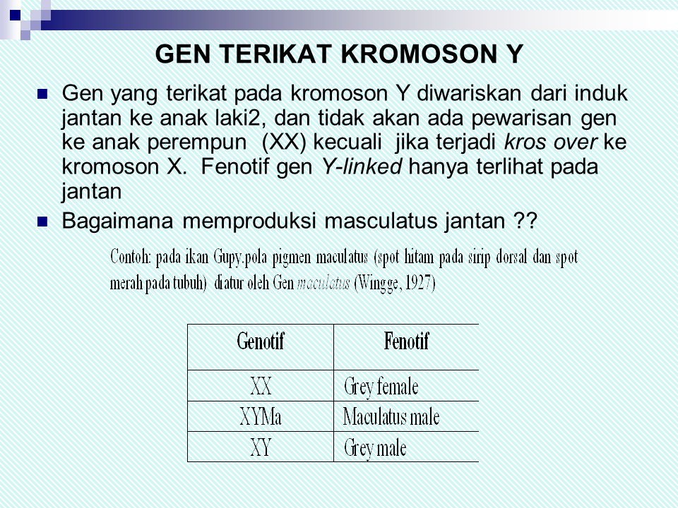 GEN TERIKAT KROMOSON Y  Gen yang terikat pada kromoson Y diwariskan dari induk jantan ke anak laki2, dan tidak akan ada pewarisan gen ke anak perempun (XX) kecuali jika terjadi kros over ke kromoson X.