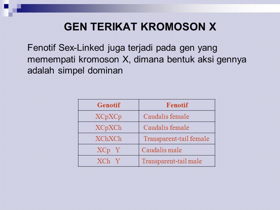 GEN TERIKAT KROMOSON X Fenotif Sex-Linked juga terjadi pada gen yang memempati kromoson X, dimana bentuk aksi gennya adalah simpel dominan GenotifFeno
